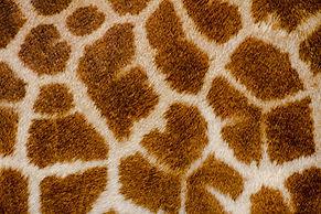 Zoo texture 3.jpg