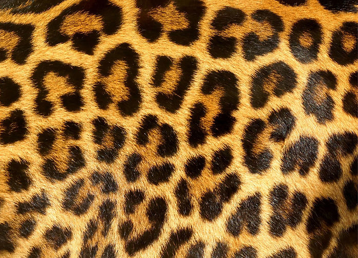 Zoo texture 1.jpg