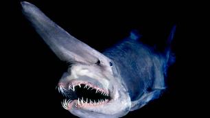As 11 criaturas marinhas mais surpreendentes do fundo do mar