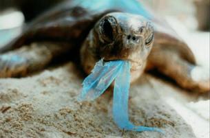 Poluição por plástico nos oceanos triplicará até 2025