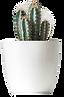 biljka-4.png