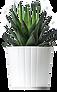 biljka-2.png