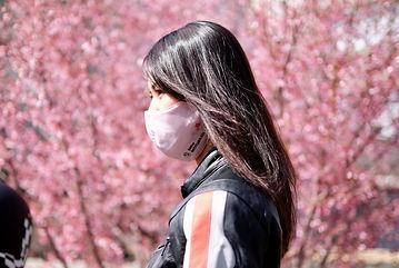 桜マスク02.jpg