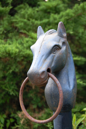2019_HGW_Wildcat Mountain horse close up