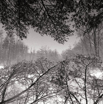 snow_banches on_pond-1.jpg