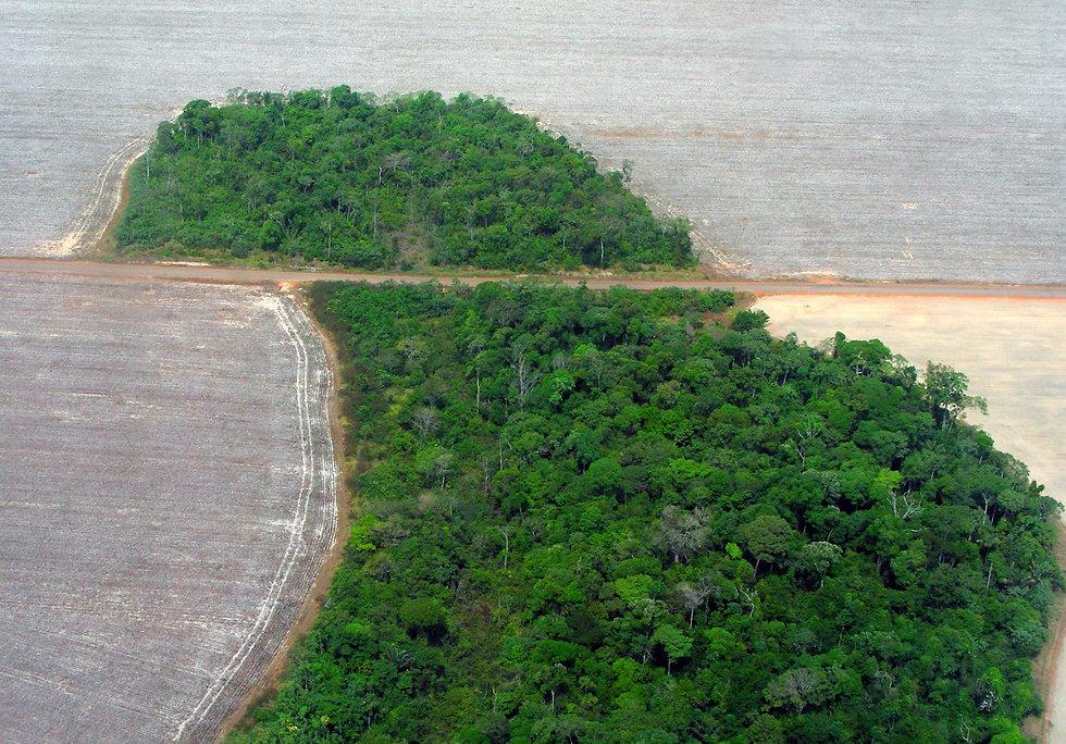 Mato_Grosso_deforestation_(Pedro_Biondi)