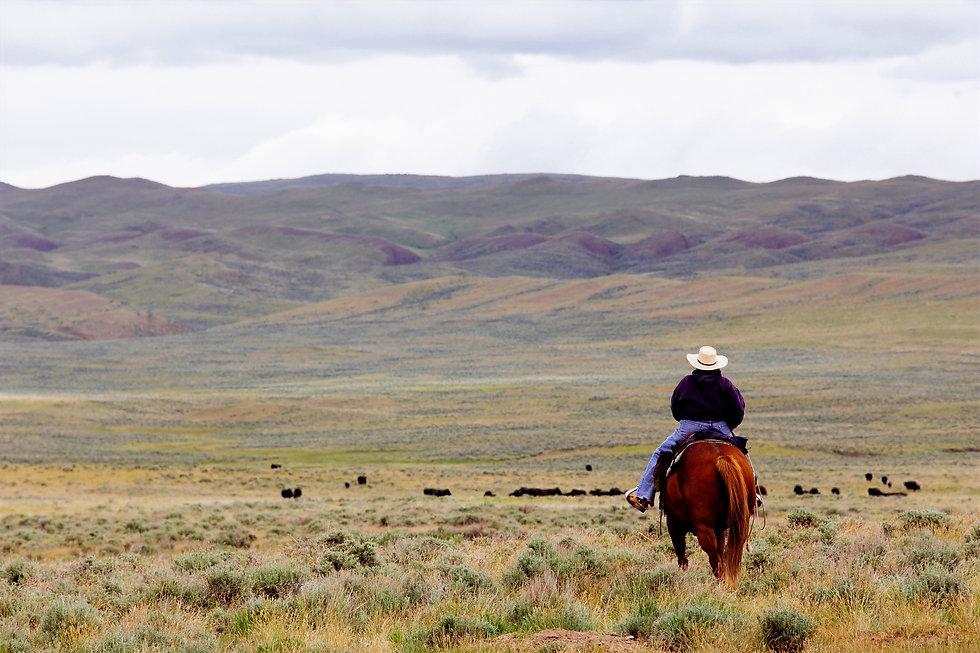 Cowboy_edited.jpg