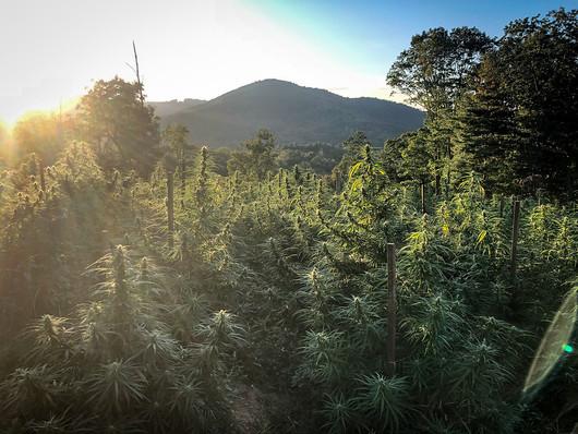 farm image sunset.jpg