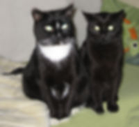 Rocky und Henry