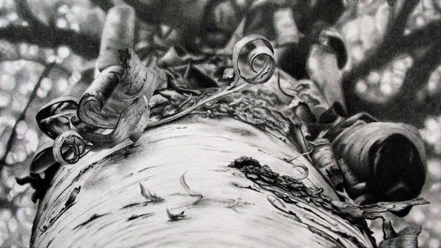 black and white graphite pencil drawing by Mercedes Victoria of birch tree bark detail