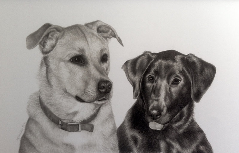 black and white chalk pastel commission drawing by Mercedes Victoria of black lab family pet dogs