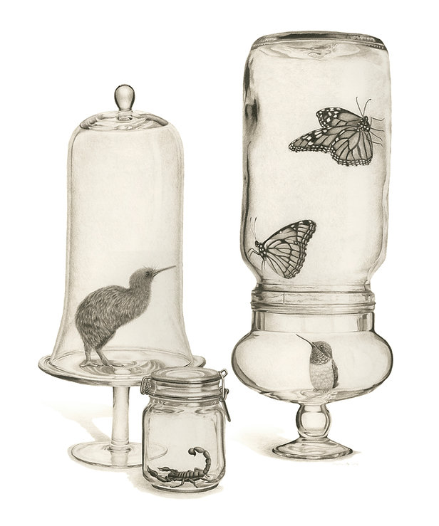 black and white chalk pastel drawing by Mercedes Victoria of kiwi bird monarch butterfly viceroy butterfly hummingbird scorpion in glass jar mason jar