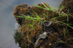 """""""Grass on Moss"""""""