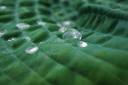 """""""Water Drop"""""""