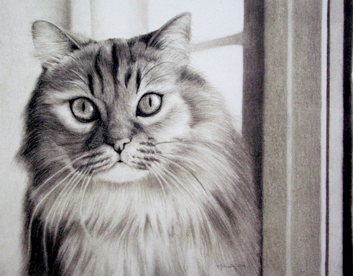 black and white chalk pastel commission drawing by Mercedes Victoria of pet family long haired cat