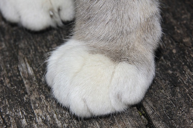 cat's paw employment investigations