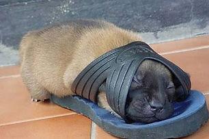 Prop.puppy.jpg