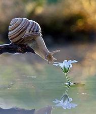 snail smelling flower.jpg