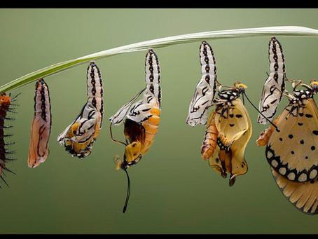 Leadership Team Transformation