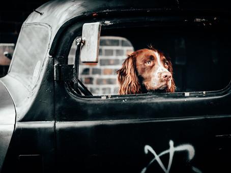 Mon chien et la voiture