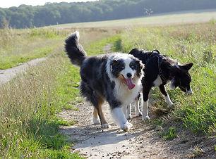 éducateur canin comportementaliste confl