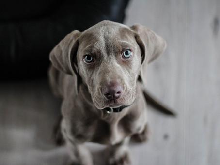 Comment choisir votre futur chien ?