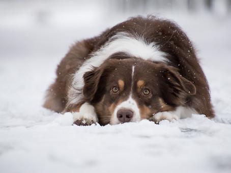 Punir son chien est-il efficace ?