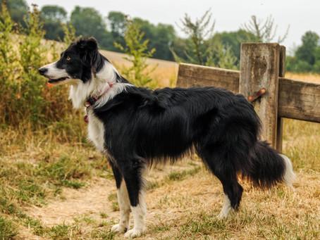 La promenade idéale pour votre chien