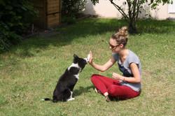 Pension pour chien dogsitter O'Canibonheur