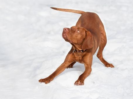 Hiver : protéger les coussinets de votre chien