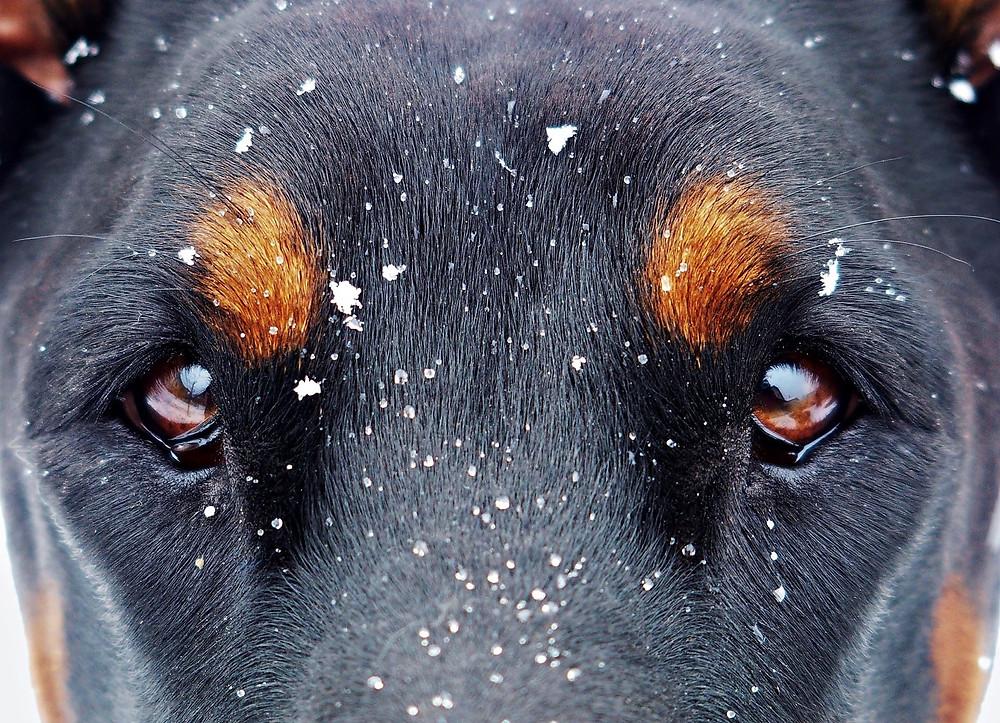 Éducateur canin comportementaliste à Conflans Sainte Honorine