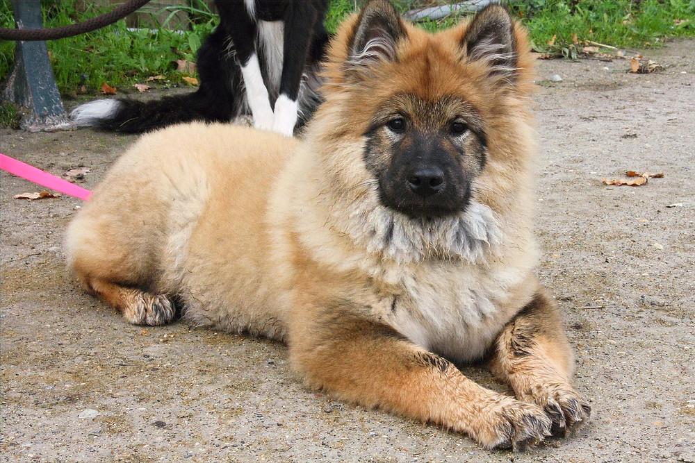 A travaillé avec O'Canibonheur: éducateur canin comportementaliste et dogsitter à Conflans-Sainte-Honorine