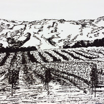 Vineyard SLO county.jpg