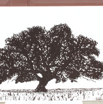 Lg Oak #4.JPG