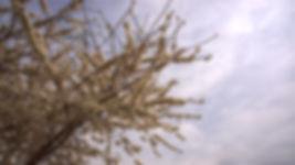 20120323-Dogwood in the Sky.jpg
