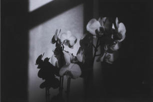Silvia Mantellini Faieta_Orchidee#2.jpg
