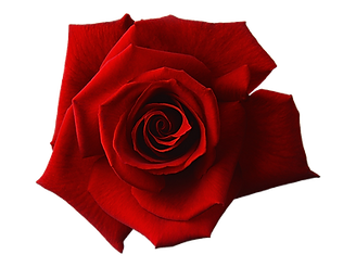 red-1649142_960_720.png