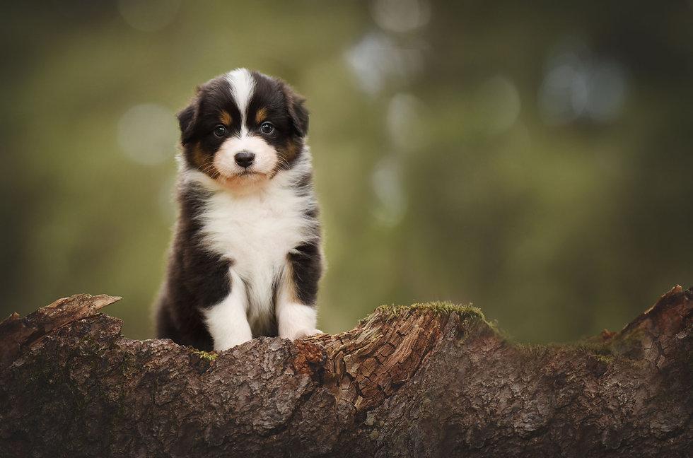 Puppy-Web.jpg