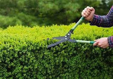 hedge2.jpg