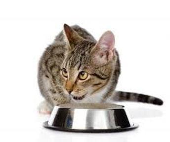 cat feeding.jpg