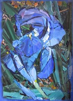 Bloom in Blues