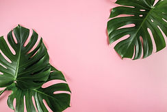tropical palm.jpeg