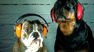 """""""I Can't Ear You"""" - 10 Ways to Protect Employees Hearing"""