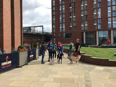 Dog Walking Event
