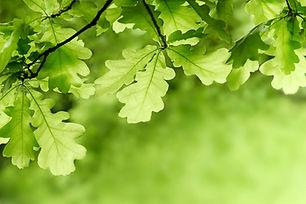 AdobeStock_268769347_edited.jpg