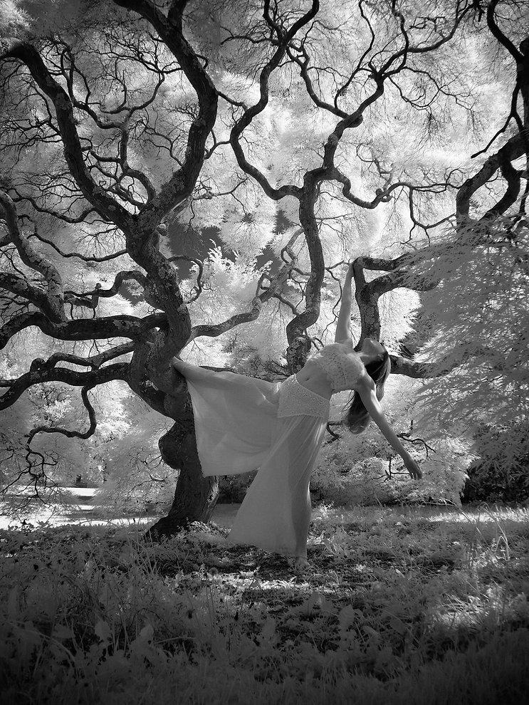Ken schwartzman tree.jpg