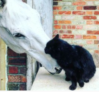 cat and horse2.PNG