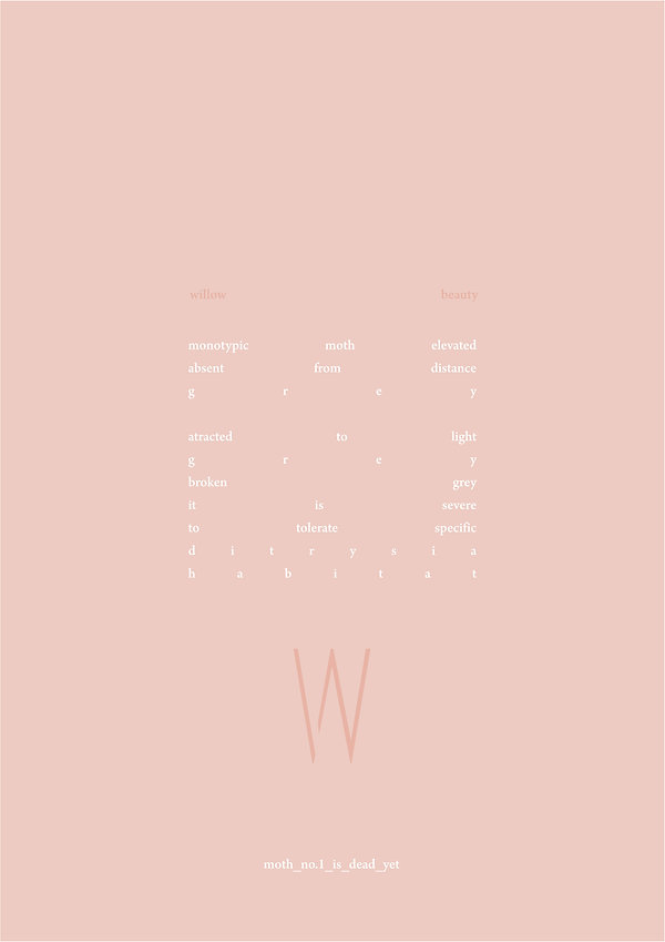 willow beauty text.jpg