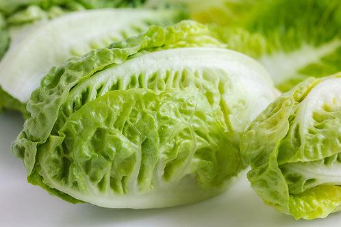 Little Gem Lettuce Seedling