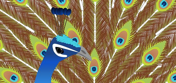 Peacock (Google Drawings)